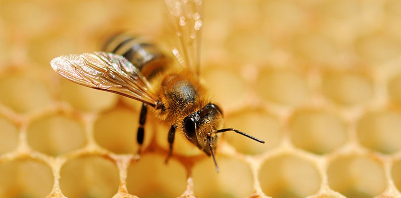 How to get rid of a cold sore healthlivingday propolis ccuart Images