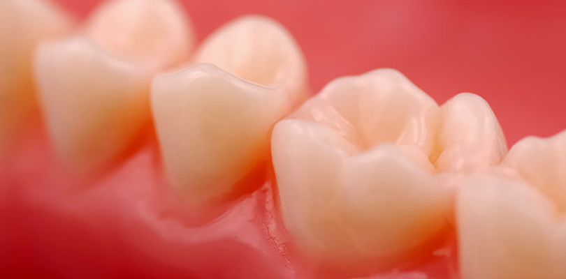The human gums and teeth
