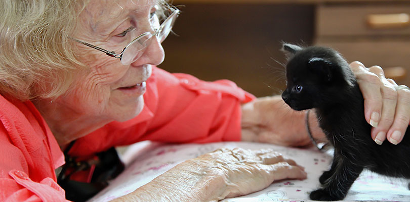 An older woman is gently petting a small black kitten