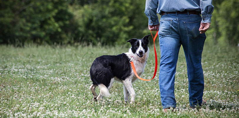 A man is walking his dog in a field